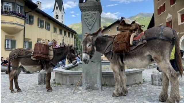 Impressiuns Via Valtellina a Zuoz.