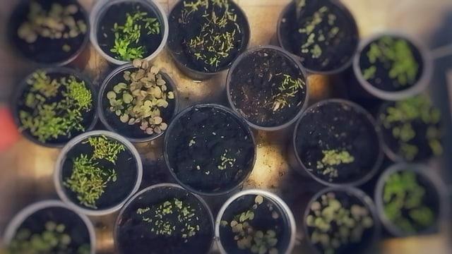 Plantinas da Laura Bott