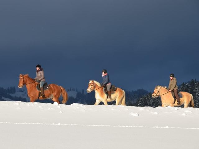 Drei Frauen reiten auf ihren Pferden in der Abendsonne. Im Vordergrund eine tiefverschneite Wiese, im Hintergrund dunkle