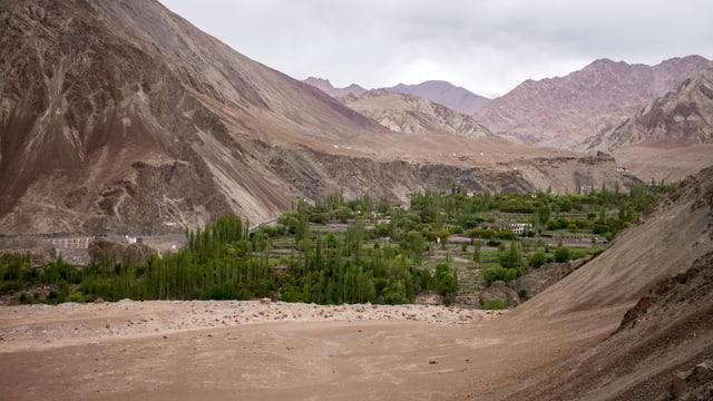 Bäume und Hügel im himalayischen Gebiet