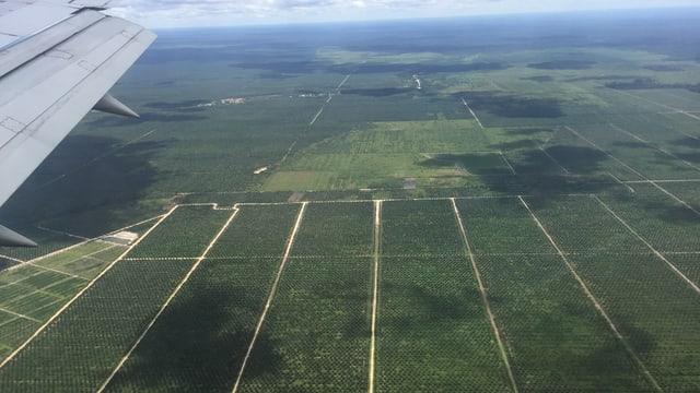 Bild aus dem Flugzeug auf riesige Plantage
