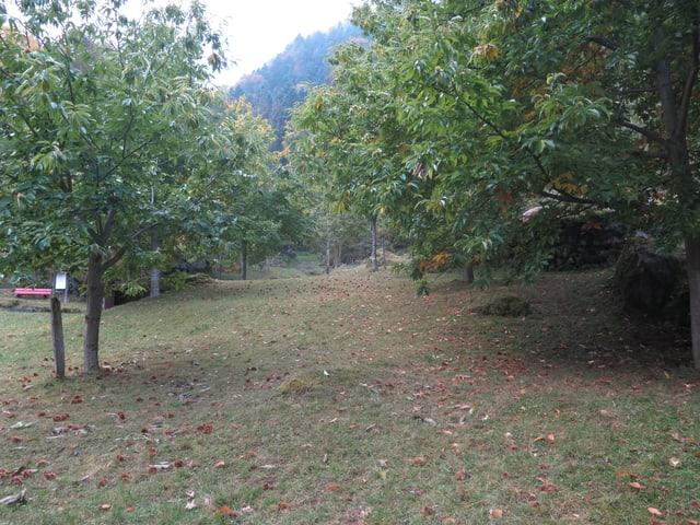 Wiese mit Kastanienbäumen