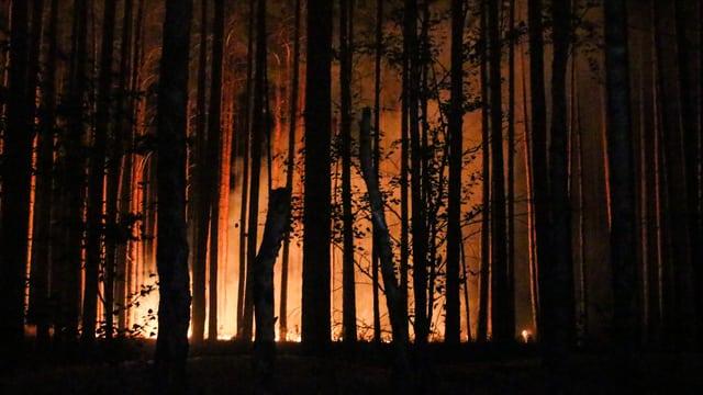 Wald brennt.