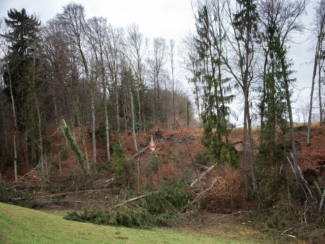 Umgeknickte Bäume am Waldrand.
