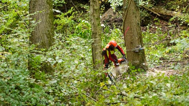 Forstarbeiter in einem Wald beim Fällen eines Baumes