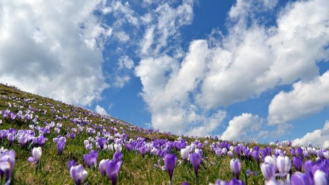 Frühlingsblumen, darüber Gemisch aus Wolken und blauem Himmel.