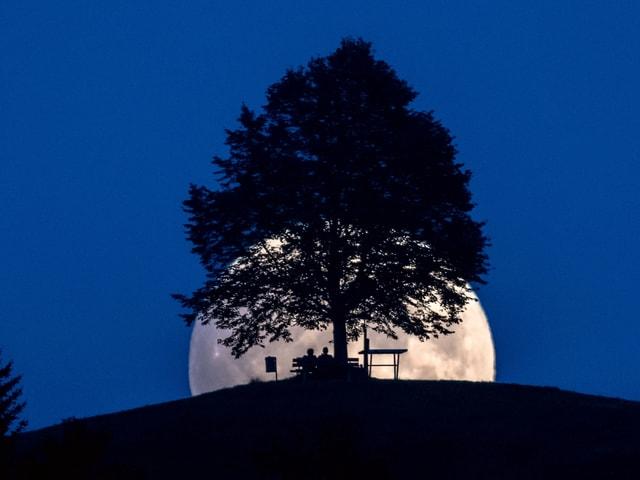 Mondaufgang mit Baum und Bank.