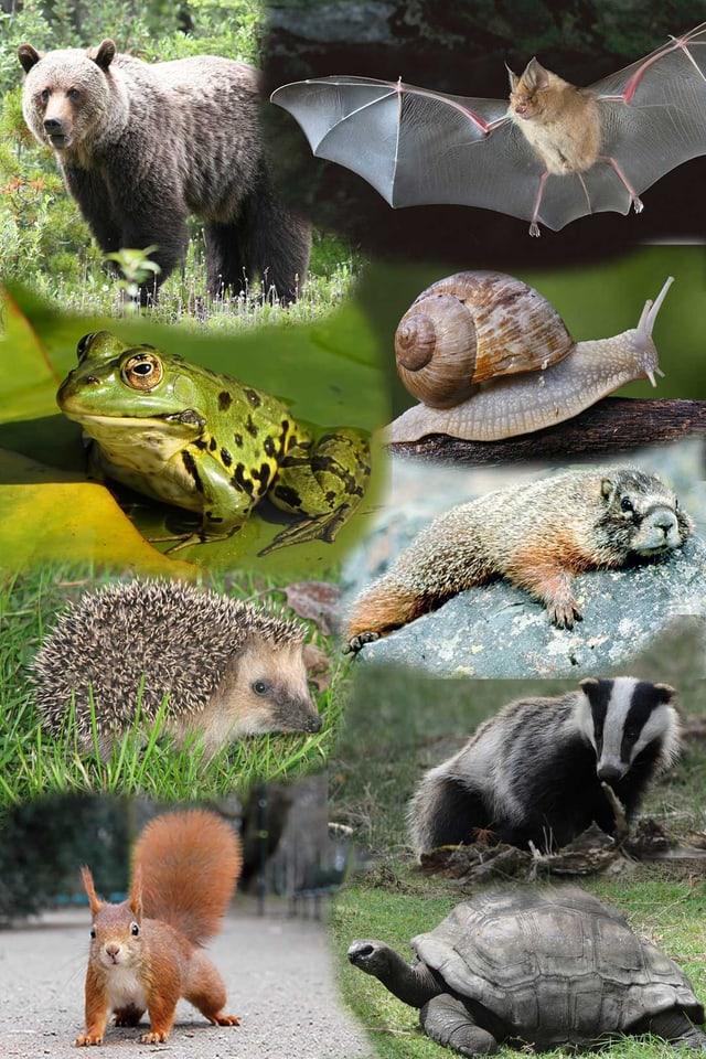 divers animals che dorman l'enviern