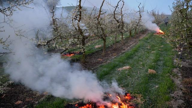 Ende Monat versuchte man in der Landwirtschaft den Frost mit Feuern zu bekämpfen.
