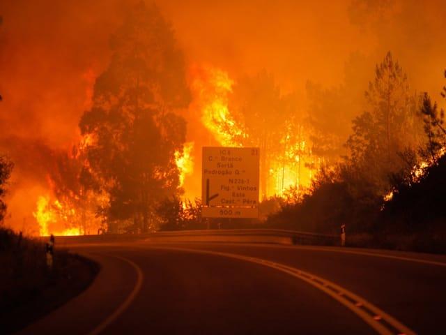 Der gewaltige Waldbrand und davor eine Strassse
