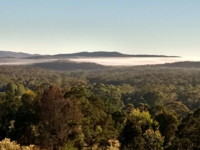 Aussicht auf den australischen Busch.