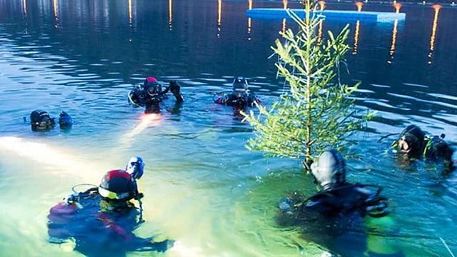 Taucher fischen einen Weihnachtsbaum aus dem Wasser.