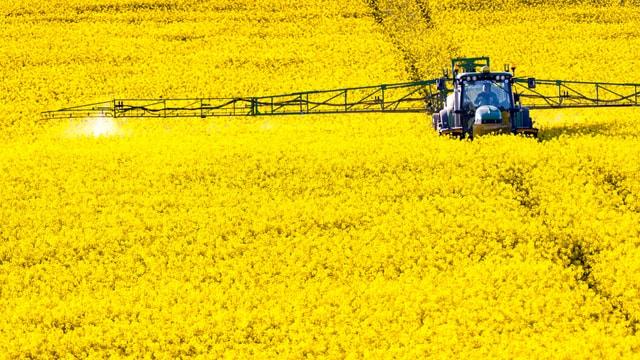 Gelbes Rapsfeld, darauf ein Traktor, der grossflächig Sprühmittel ausbringt.