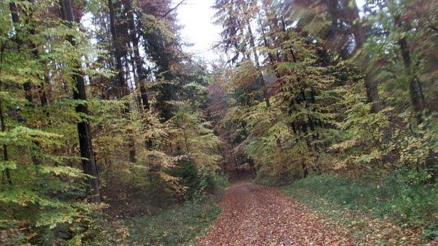 Ein laubbedeckter Weg, gesäumt von Bäumen mit gelben und roten Blättern.