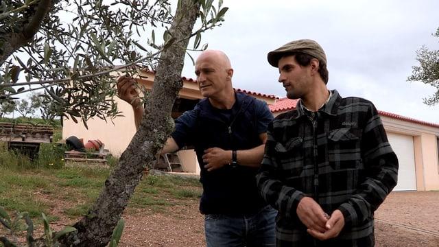 Richard Kägi begutachtet die Oliven von Bauer Daniel Martins