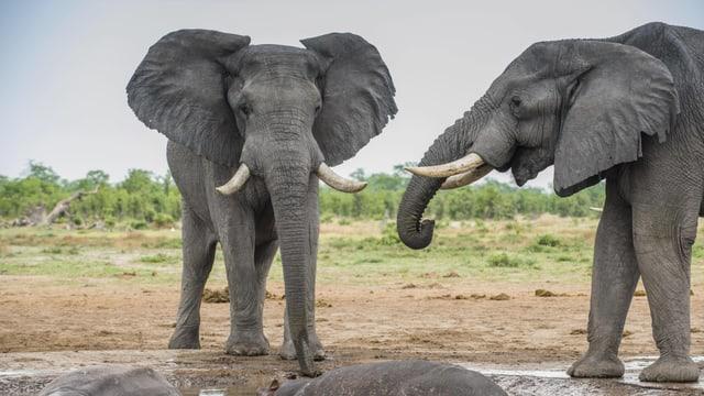 Zwei Elefanten an einem Wasserloch.