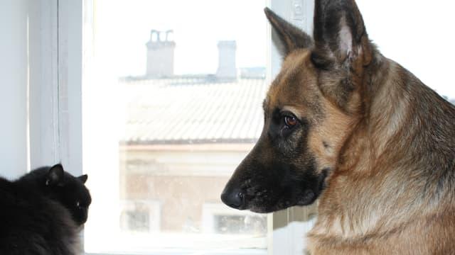 Hund und Katze vor einem Fenster.