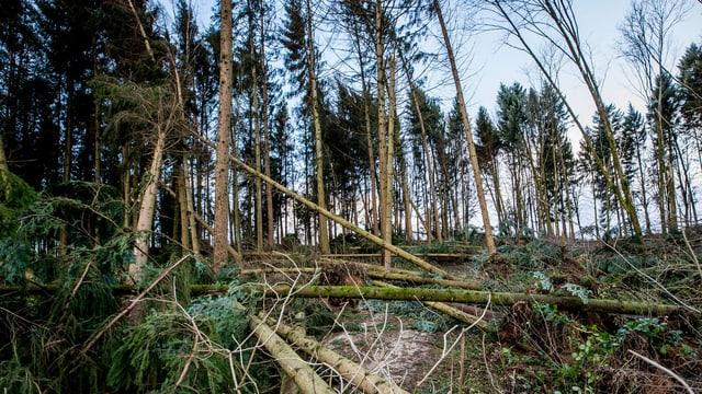 Ein Wald, im Bildvordergrund geknickte Bäume.