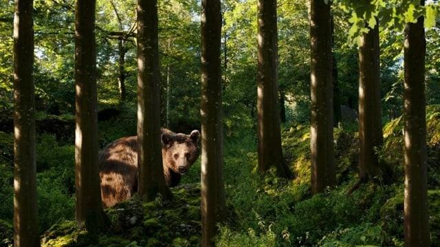 Sumegliant sco en il zoo a Goldau pudessi bainbaud er vesair ora ad Arosa.