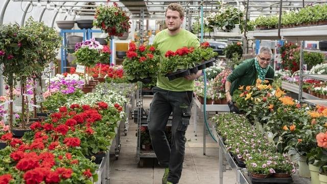 Nach dem Shutdown grünt es grüner: Pflanzenbranche profitiert