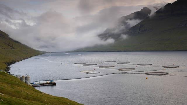 Lachsfarm auf den Färöern