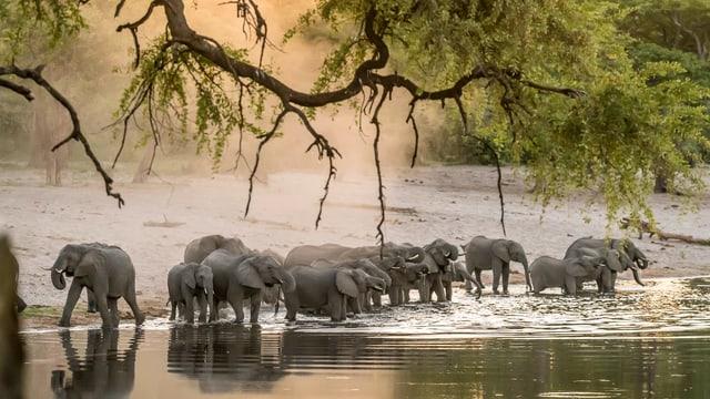 Elefanten stehen im Wasser.