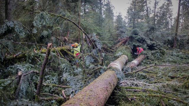 Arbeiter in einem Waldstück mit umgestürzten Bäumen