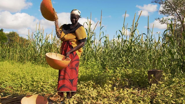 Eine afrikanische Frau bei der Feldarbeit.