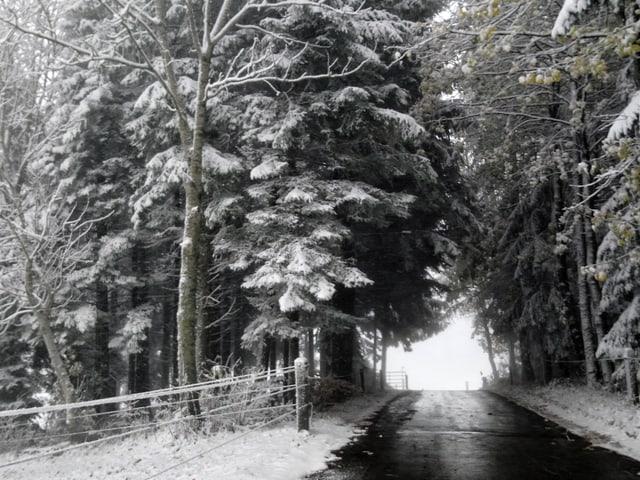 Nasse Strasse, verschneite Bäume.