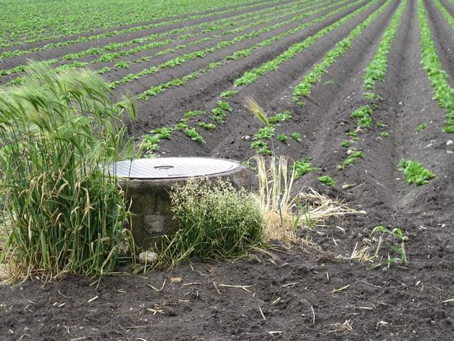 Ein Schacht ragt aus einem Erntefeld. Der Abstand zum Boden ist rund 50cm. Hinten sieht man spriessendes Gemüse.