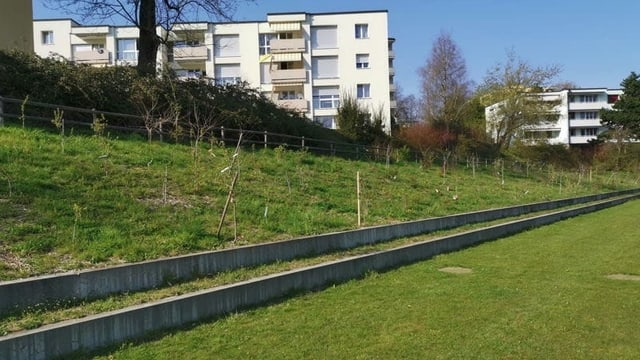 Wildobstgarten St Gallen