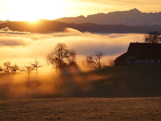 Im goldenen Morgenlicht steht ein Bauernhof unmittelbar an der Nebelobergrenze. Hinter dem Hof liegt ein Nebelmeer, am Horizont ist der Pilkatus zu sehen.
