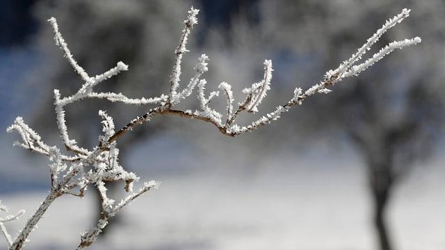 Rauhreif auf einem Ast in einer Winterlandschaft