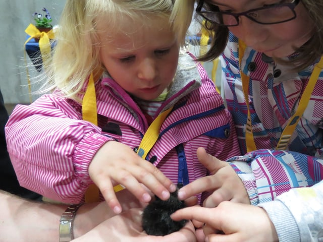 Zwei Mädchen streicheln ein Bibili