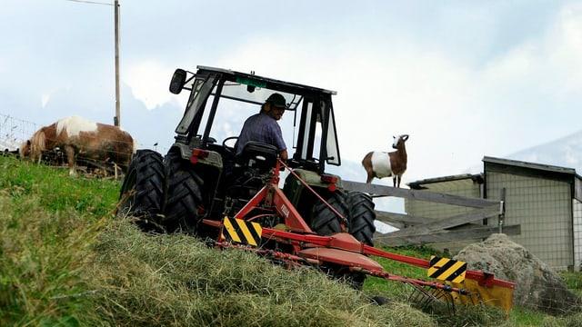 Bauer auf einer Mähmaschine mäht eine abfallende Wiese im Hintergrund eine Kuh und eine Ziege