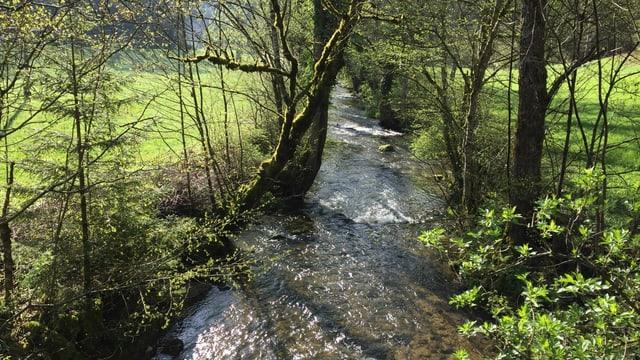 Bach mit Bäumen am Ufer