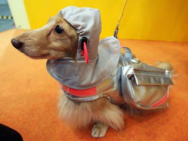 Ein Hund mit futuristischem Kostüm.
