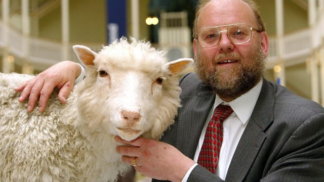 Professor Ian Wilmut mit Dolly, dem weltweit ersten geklonten Schaf im Museum in Edinborough.