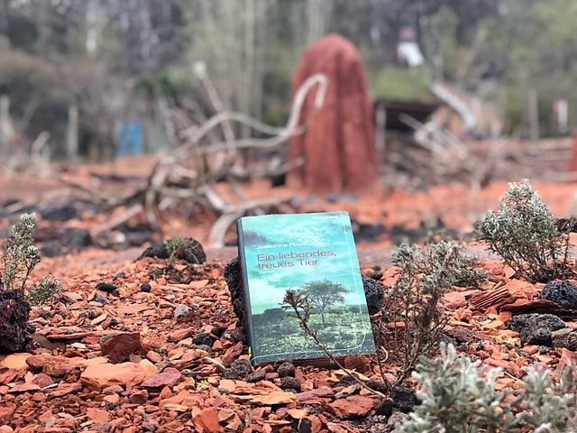 Josephine Rowes Roman «Ein liebendes, treues Tier» liegt in einer typischen australischen Landschaft