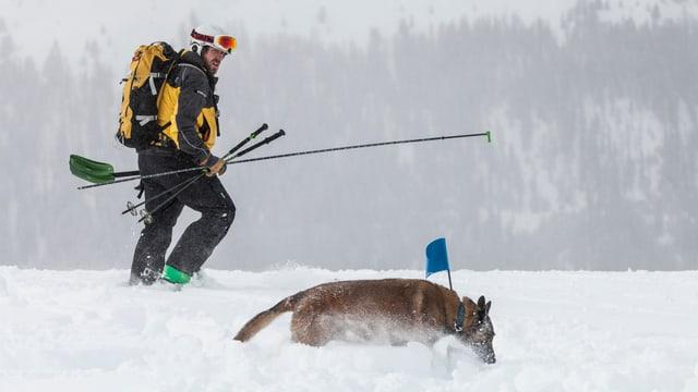 Retter und Lawinenhund in Bewegung