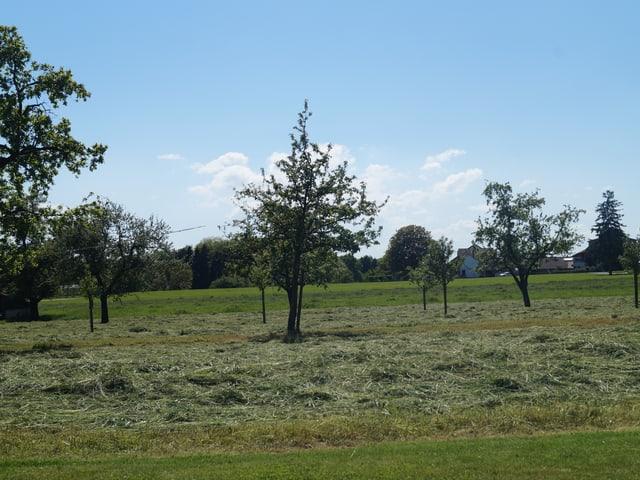 frisch geschnittenes Gras