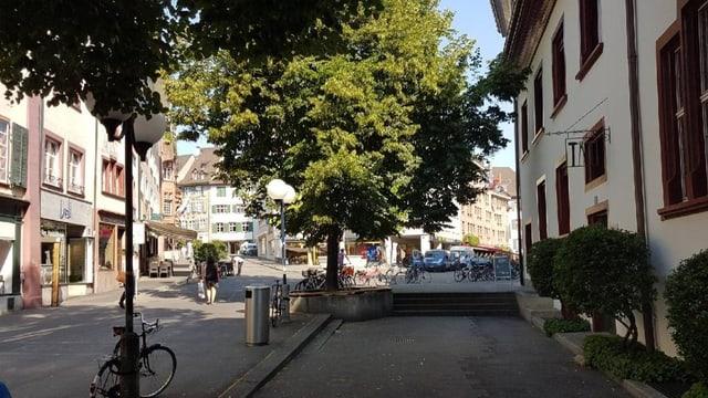 Ein grosser Baum auf dem Basler Rümelinsplatz
