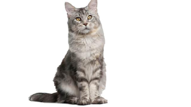 Die Bedürfnisse einer Katze