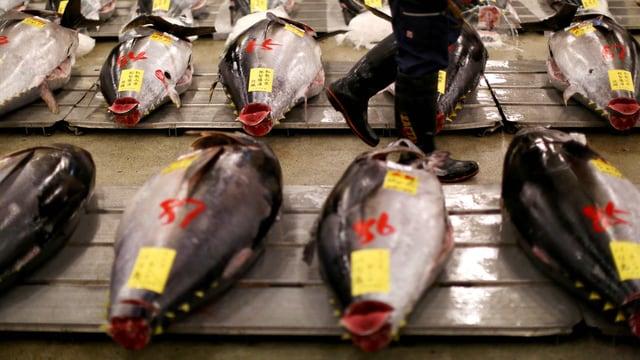 Fisch liegen reihenweise auf Plletten
