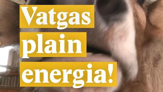 Laschar ir video «Vatgas plain energia!»