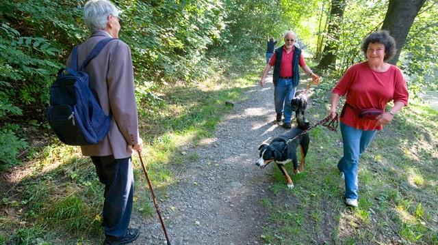 Hunde im Wald, Hundeschule