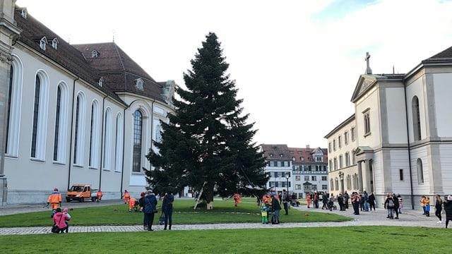 Die Weihnachtstanne kommt aus Untereggen, ist 20 Meter hoch und wiegt 5 Tonnen.