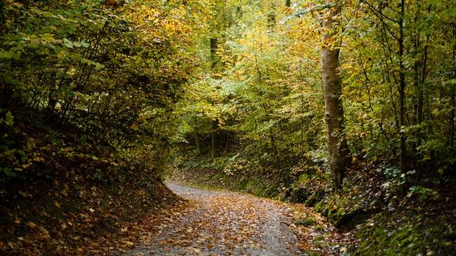 Wald. Es fürht ein schmaler weg zwischen Bäumen hindurch.