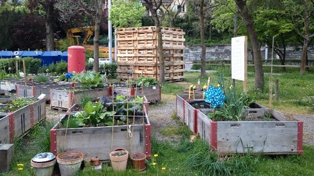 SBB-Kisten als Gartenbeet