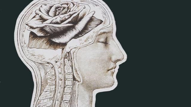 Zeichnung eines Kopfes, in der eine Rose statt des Gehirns abgebildet ist.